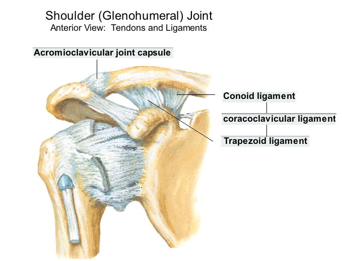 OurMedicalNotes: Acromioclavicular Injury