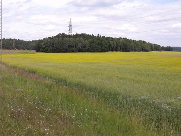 fält, gult fält