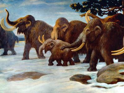 Mudanças naturais no clima, e não a ação humana, é que extinguiram grandes mamíferos