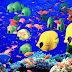 Η Ερυθρά θάλασσα κρύβει εξωτικές εκπλήξεις
