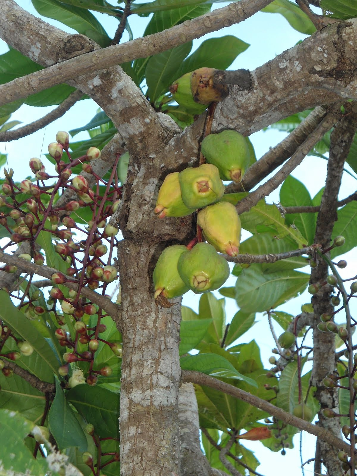 Frutos exoticos