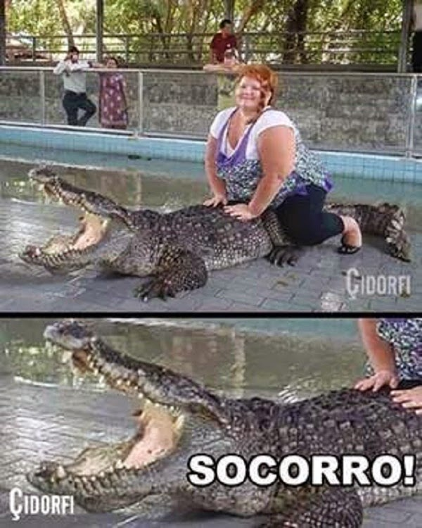 Pobre cocodrilo