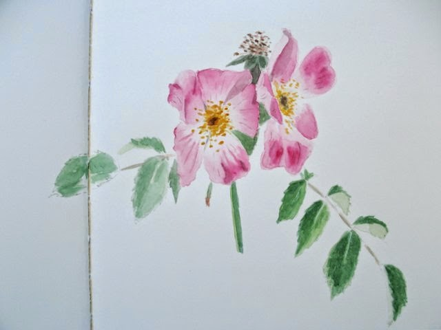 Natural world journal dog roses watercolour