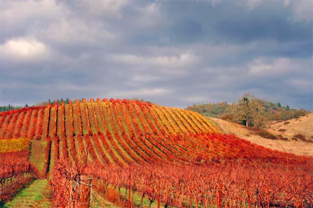 Autumn At The Vineyard4