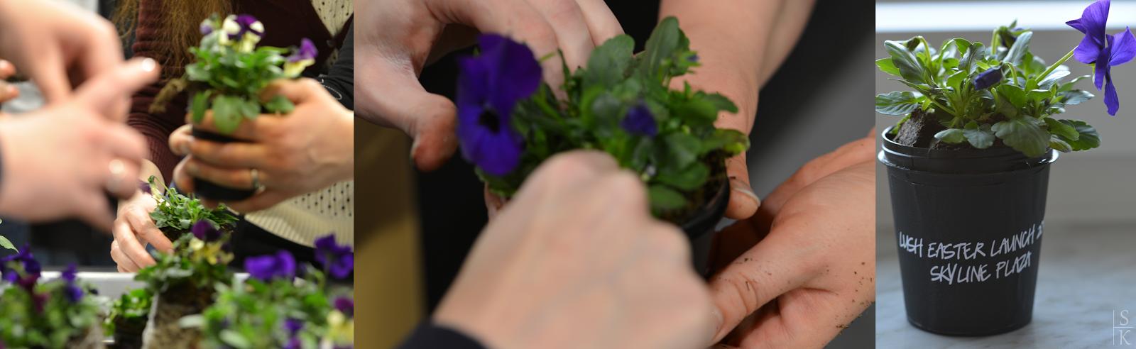 Veilchen pflanzen beim Lush Easter Launch 2015 im Skyline Plaza Frankfurt