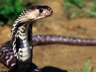 rüyada+yılan+görmenin+anlamı