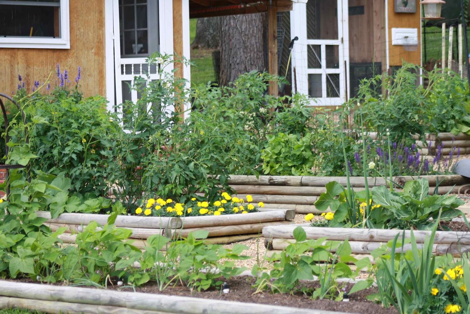Roses and other gardening joys lakeside living garden tour for Fruit and vegetable garden