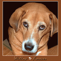 Willow  RIP