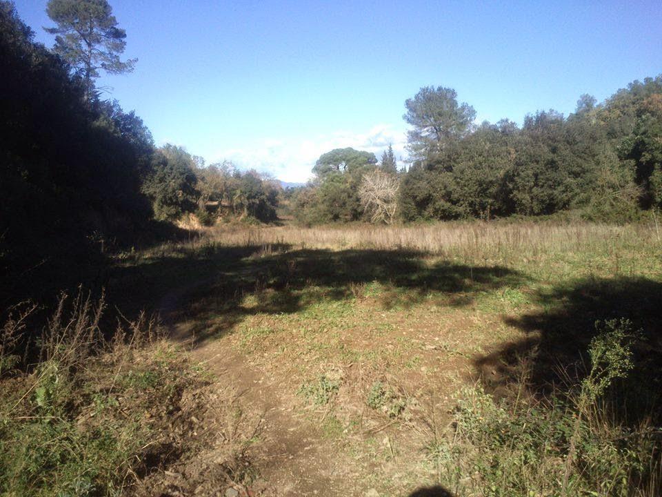 Zona de Can Lloses, en las entrañas NWs de Collserola (término municipal de Cerdanyola). [Foto: Alberto Prieto Martín]