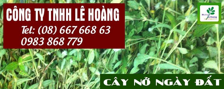 Hotline: (08) 667 668 63 - 0983 868 779