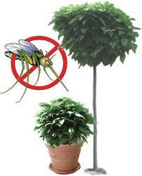 Plantamer repelentes de mosquitos con plantas - Plantas ahuyenta mosquitos ...