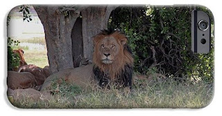 Buy iPhone case of Male Lion