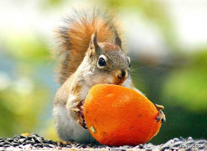 cute squirrels doing cute things   animals own world