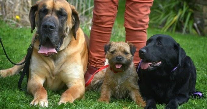 Female Dogs Mark Territory Site Craigslist Org