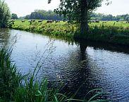 Foto bij artikel Kwel blijkt oorzaak fosfaatoverschot in water: metingen van waterschappen voor Nitraatrichtlijn misleidend