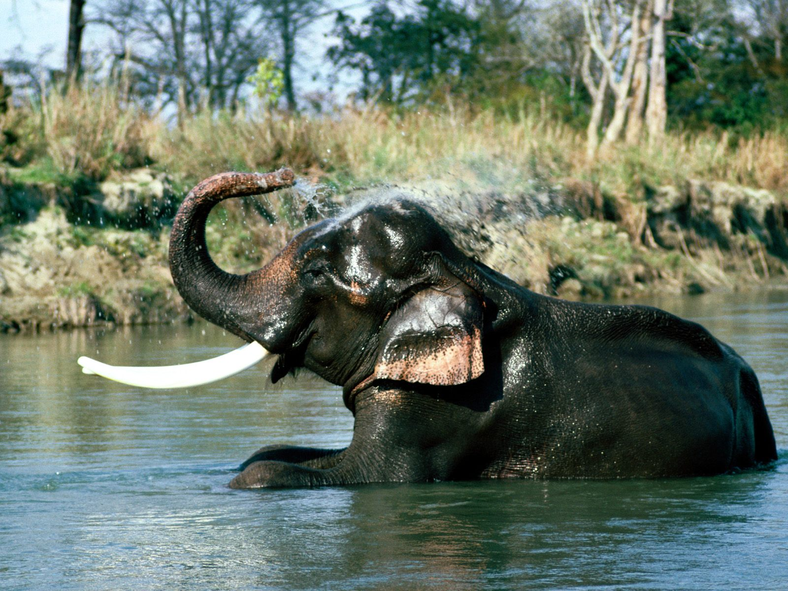 Must see Wallpaper High Quality Elephant - indian-elephants-High-Resolution-wallpapersphotosz  Pic_463961.jpg