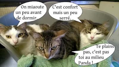 Trois chats dorment ensemble dans un panier.