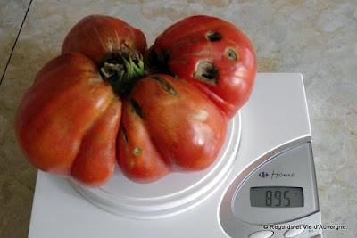 grosse tomate Beefsteak  895 grammes