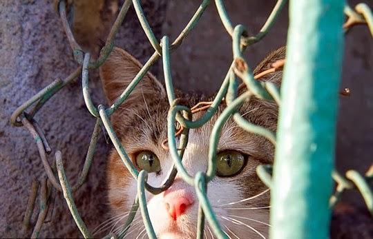 street cat from istanbul turkey