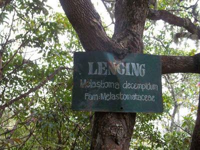 lencing,hutan senaru