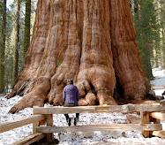Enorme tronco