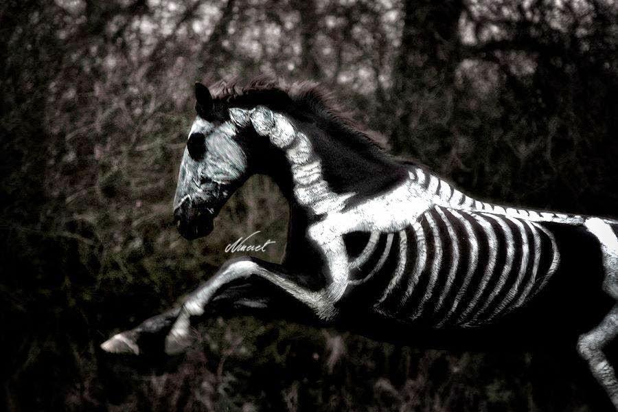 Caballos Hermosos: Los caballos perfectos para Hallowen