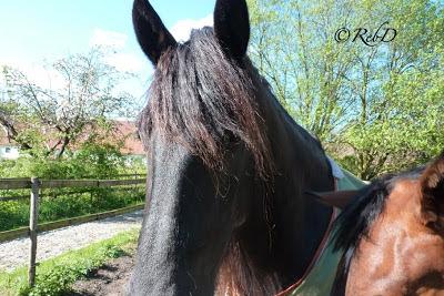 häst foto: Reb Dutius