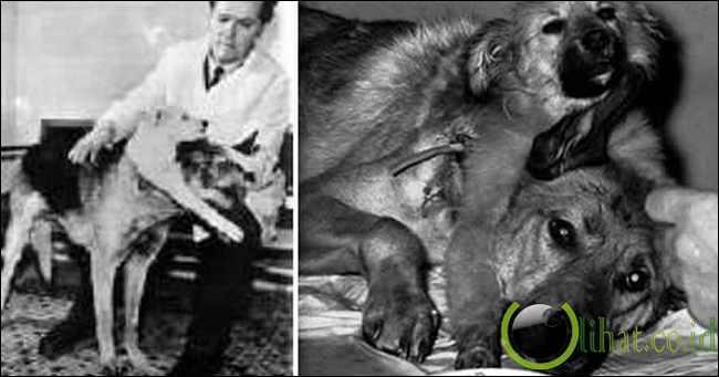 Vladimir Demikhov (Pencangkokan Anjing Berkepala Dua)