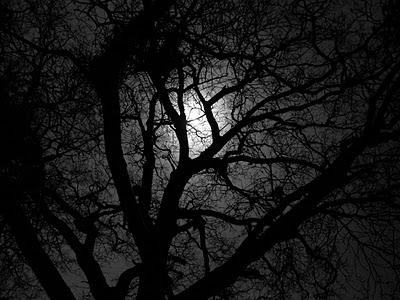POEMAS SIDERALES ( Sol, Luna, Estrellas, Tierra, Naturaleza, Galaxias...) - Página 23 Luna+sobre+bosque