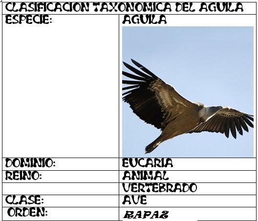 welcome!!!!!!: EJEMPLO DE CLASIFICACION DEL AGUILA