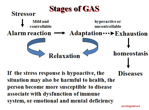 test anxiety: an extreme response to an academic stressor essay Scale (stress) and 16-factor coping with academic demands scale  more  frequent exposure to stressful life events or to more severe environmental  stressors is  exams, and ib diploma requirements such as the extended essay   types of coping strategies in response to their intense academic.