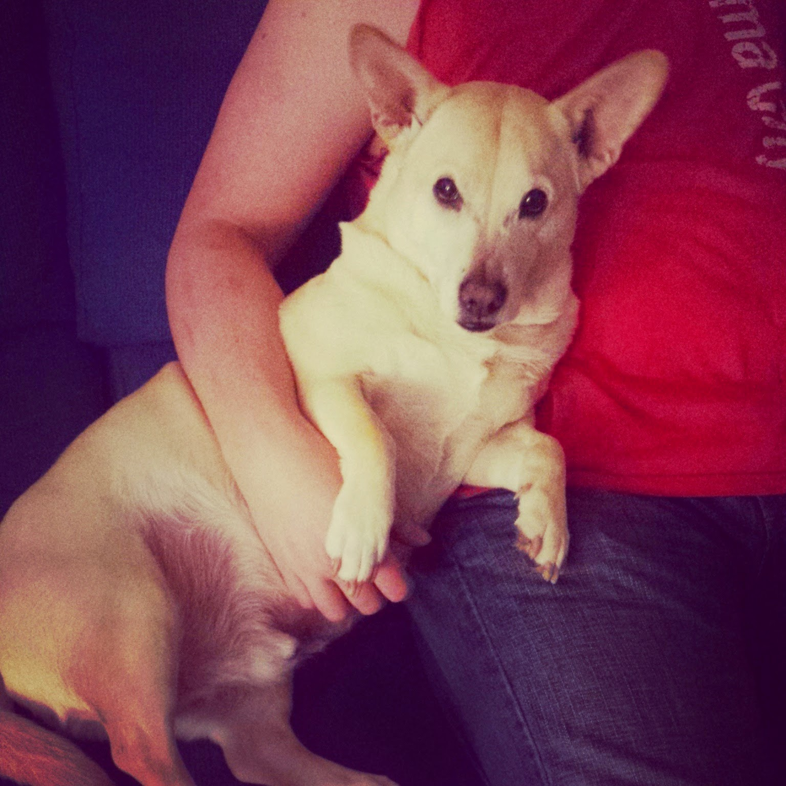 Saving Grace Dog Rescue Millersville