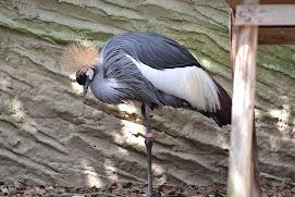 جانوروں  اور پرندوں کے بلاگ پر آج