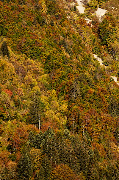 Image of mountain forest by an autumn dusk