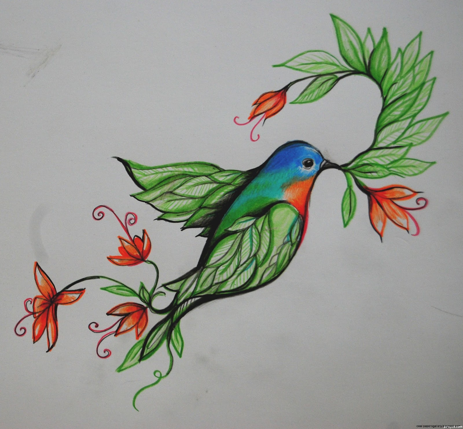 Bird of Paradise Flower Drawing