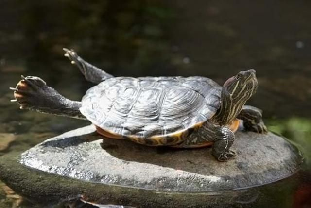 funny animals, tortoise relaxing