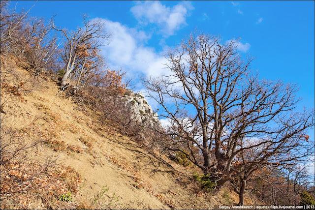 Склоны горы Мшатка, которая нависает над Староялтинской дорогой