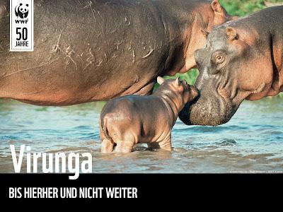 SOS Virunga - Bis hierher und nicht weiter