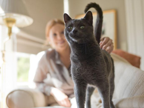 Helping Your Senior Cat Age Well