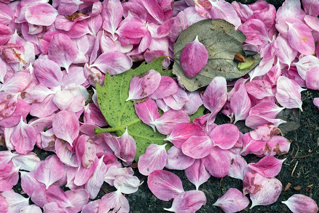 green leaves underneath pink petals