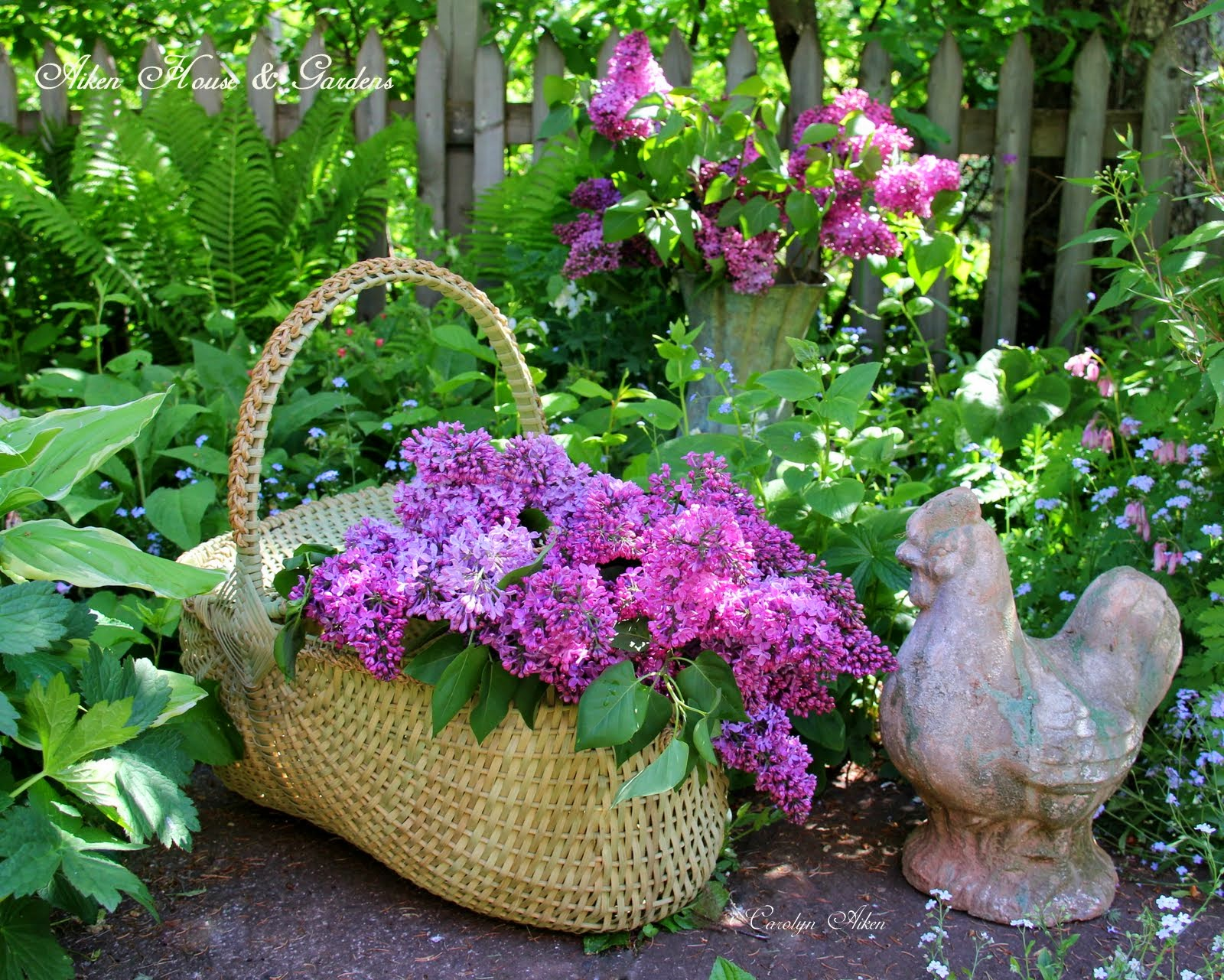 Lilacs And Garden Vignettes