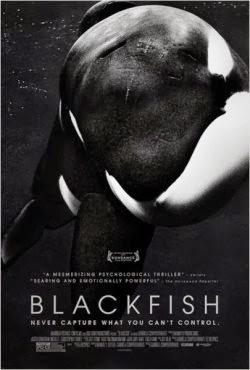 Baixar Filme Blackfish: Fúria Animal Dual Audio