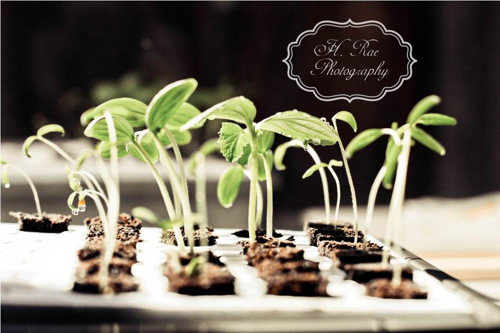 An Original Belle 2012 Vegetable Garden Plan