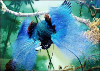 Exotic birds of paradise exotic birds in flight exotic birds from