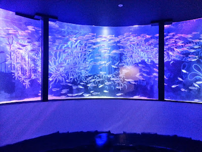 SEaLife Manchester huge circular fish tank aquarium