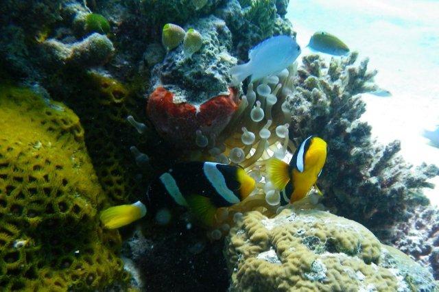Peces y fondo de coral en las Maldivas