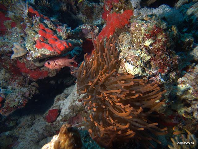 Красный коралл на глубине 20 метров с подсветкой