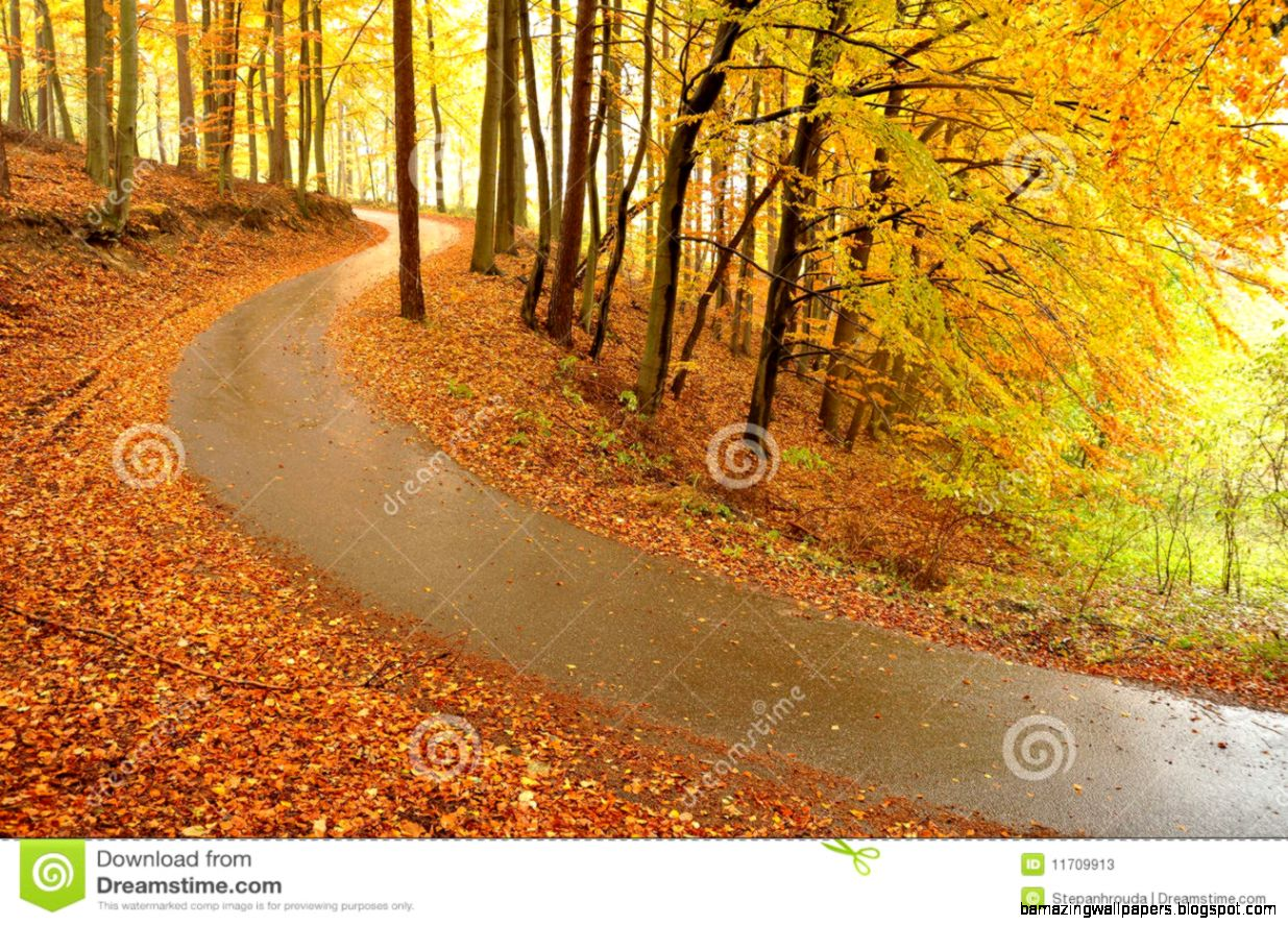 Beautiful Autumn Trees And Road Stock Photos   Image 11709913