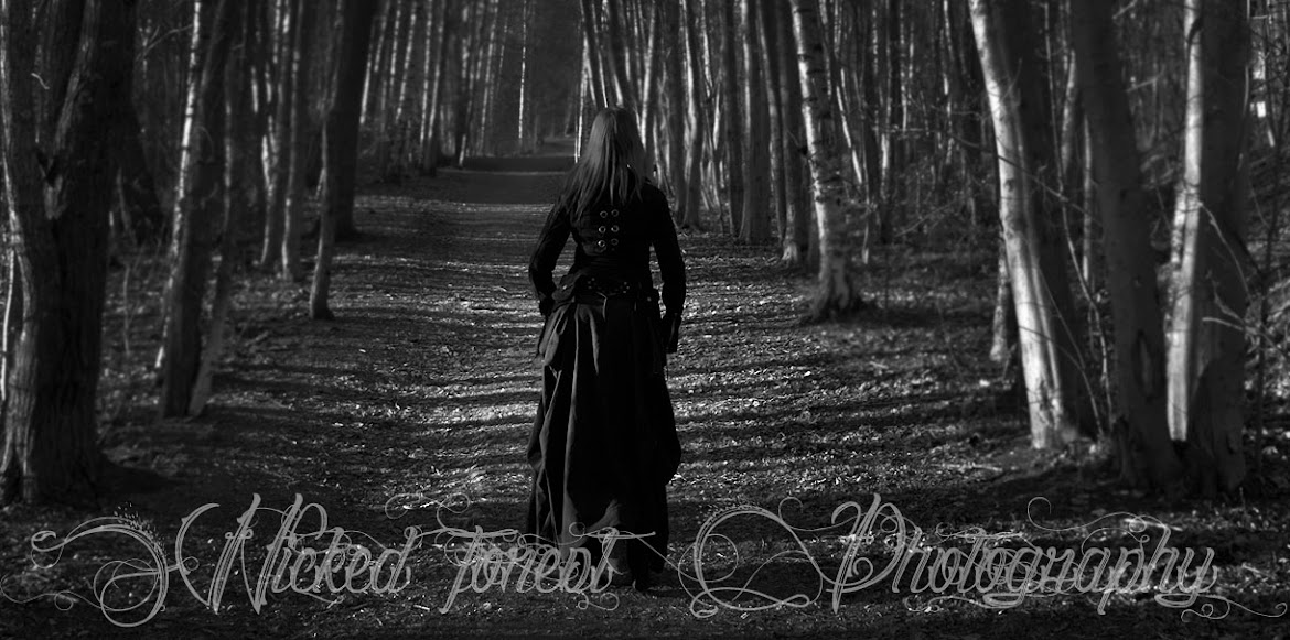 Wicked Forest Photography
