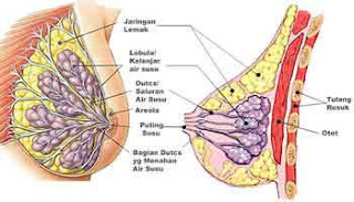 membesarkan payudara tradisional